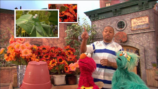 Sesame Street 4213