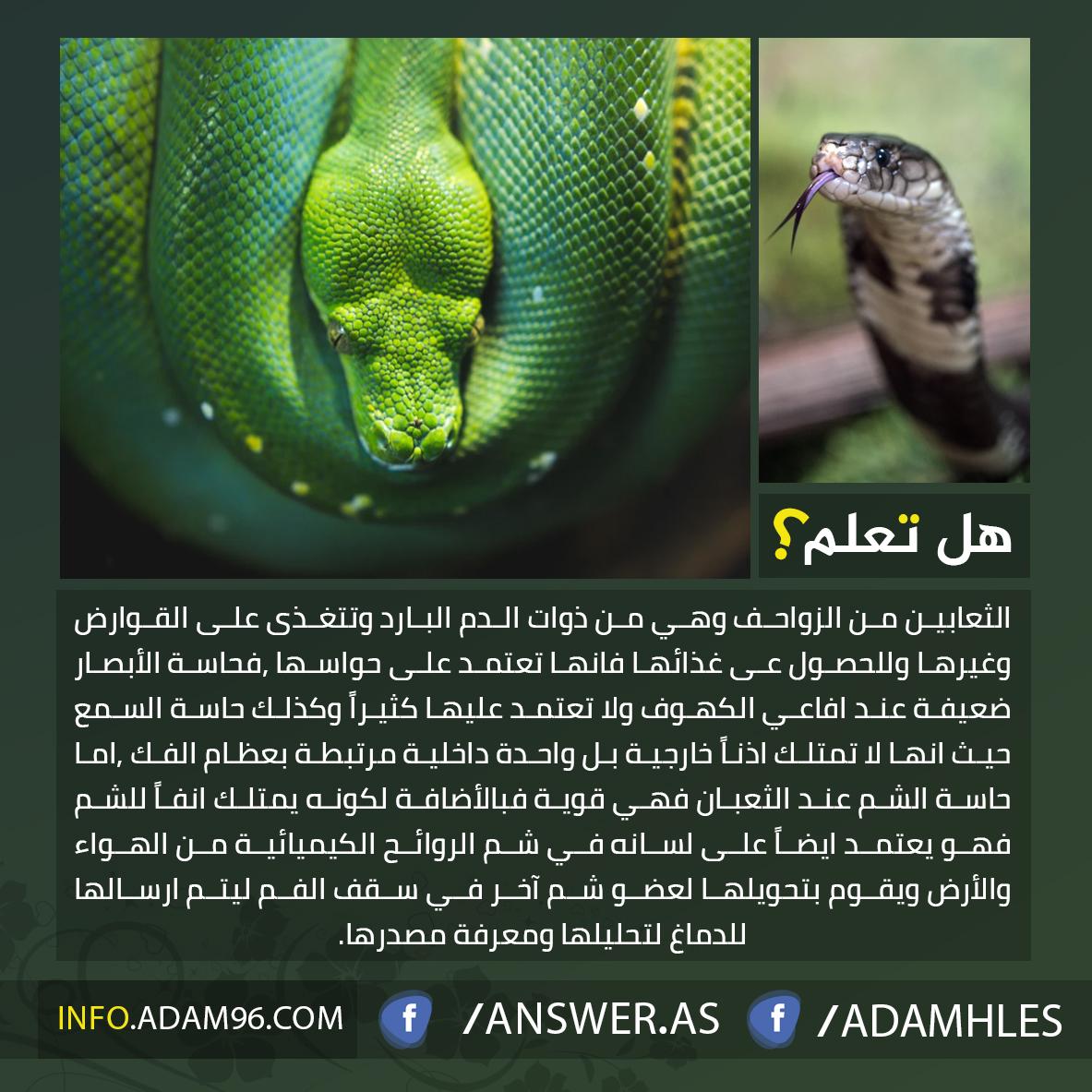 معلومات مدهشة عن الثعابين