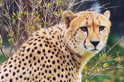عالم الحيوانات واكثر الحيوانات المفترسة في العالم