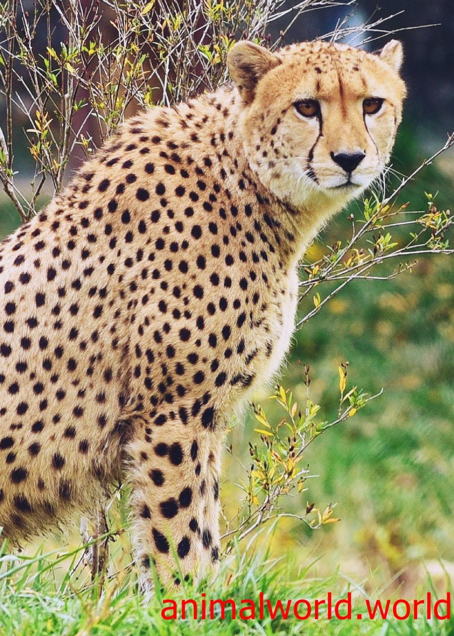 اسرع الحيوانات علي وجه الارض موسوعة عالم الحيوانات