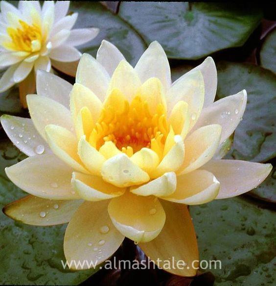 أجمل الأزهار في العالم