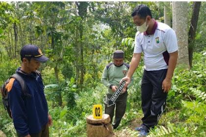 Berawal Dari Kecelakaan,Kasus Ilegal Logging Ditrenggalek Terbongkar