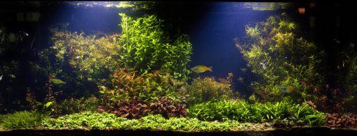 cara menyuburkan tanaman aquascape
