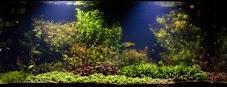 Cara Menyuburkan Tanaman Aquascape Untuk Pemula