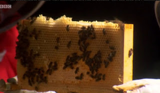 Bees and a honeycomb