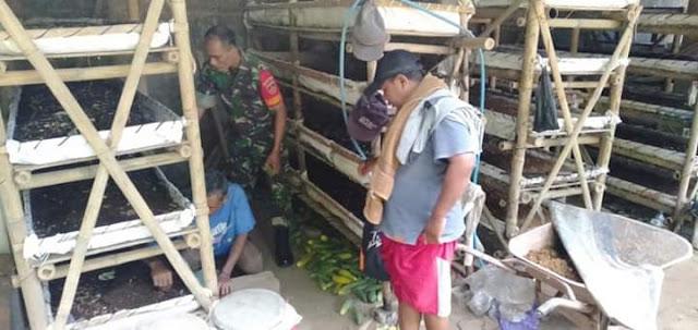 Babinsa Manisrenggo Sambangi Lokasi Budidaya Cabe