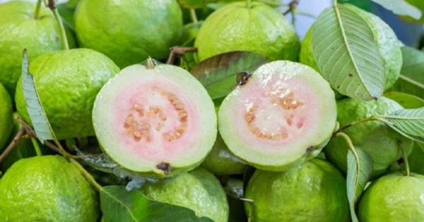 guava-leaves-to-beat-wrinkles-skin-allergiesdark-spots-and-acne