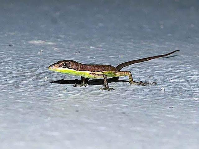 side view of lizard