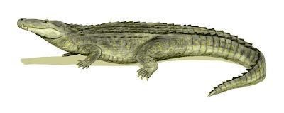 cocodrilos del mioceno Purussaurus