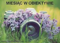 http://misiowyzakatek.blogspot.com/2017/02/miesiac-w-obiektywie-podsumowanie.html