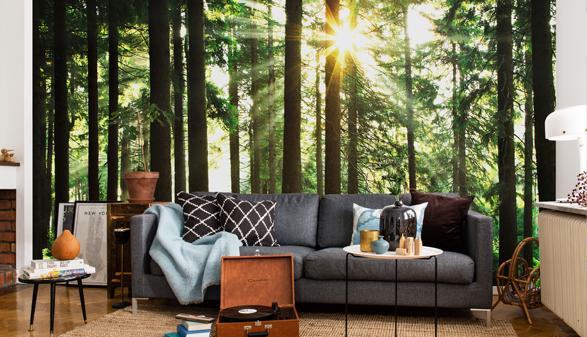 Fondtapet vardagsrum skog tapet fototapet trädstammar