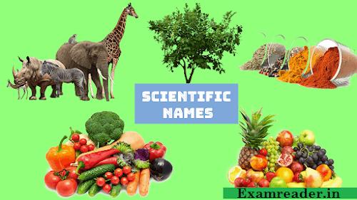 All Scientific Names