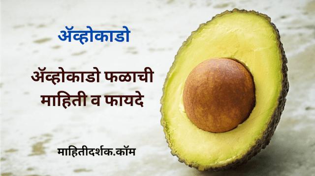 ॲव्होकाडो फळाची माहिती व फायदे | Avocado in Marathi - माहितीदर्शक