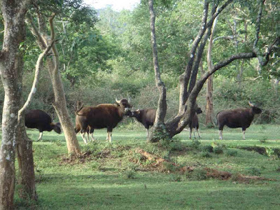 achanakmar-wildlife-sanctuary-bilaspur,Chhattisgarh,chhattisgarh_tourism,chhattisgarh _tourist_ places,chhattisgarh_tourist,chhattisgarh_tourist_places_near_raipur