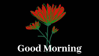 Red flowers good morning
