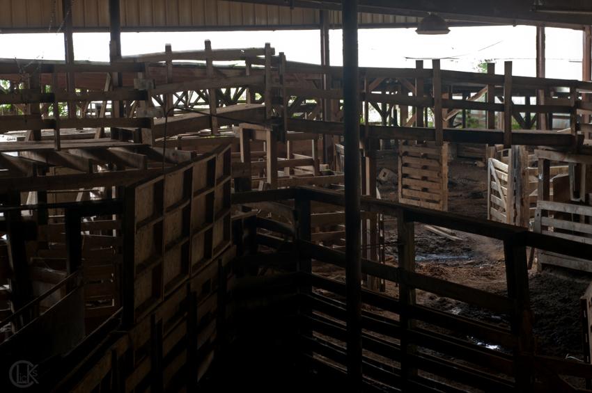 Stock options livestock marketing
