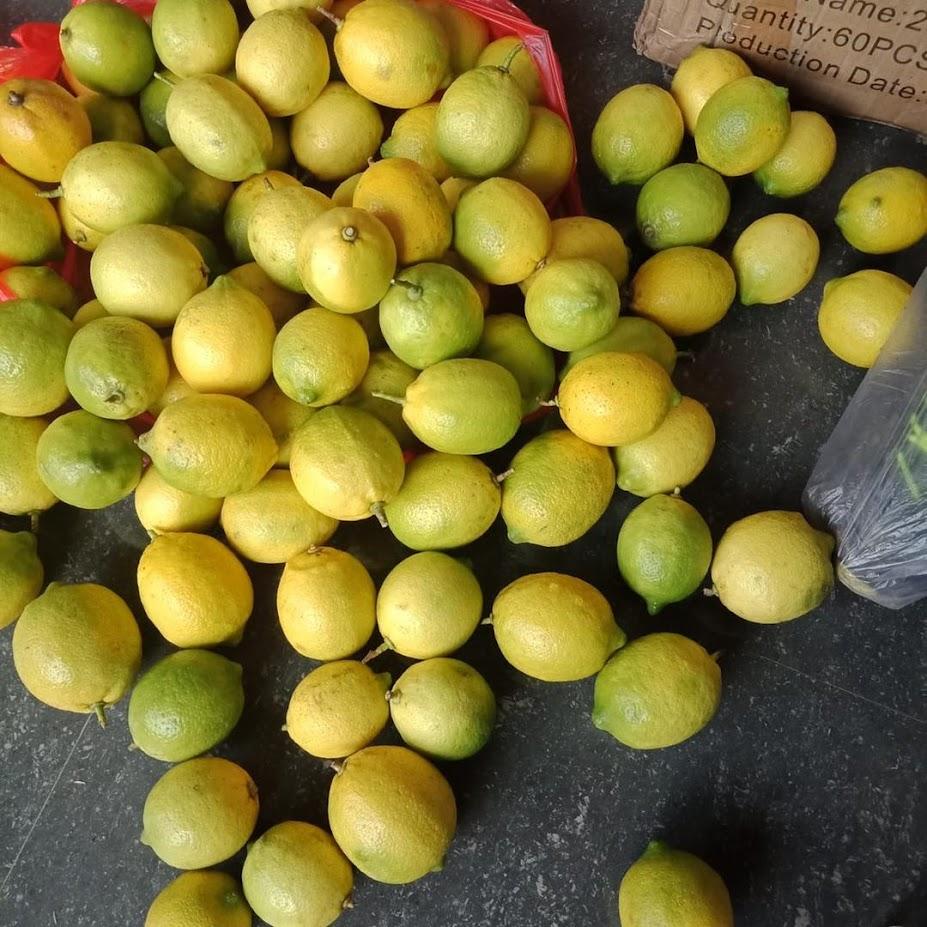 Bibit Buah Jeruk Import Lemon Eureka Madiun