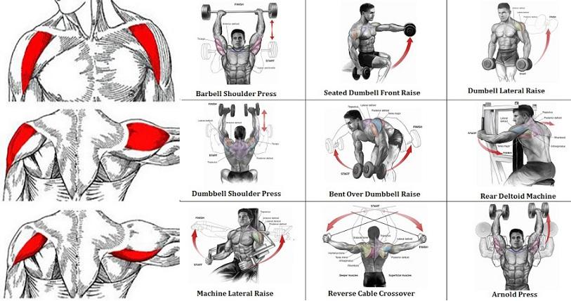 The Most Effective Shoulder Exercise - all-bodybuilding.com