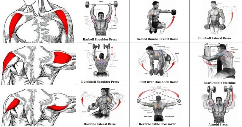 Best Mass Building Workouts For Chest