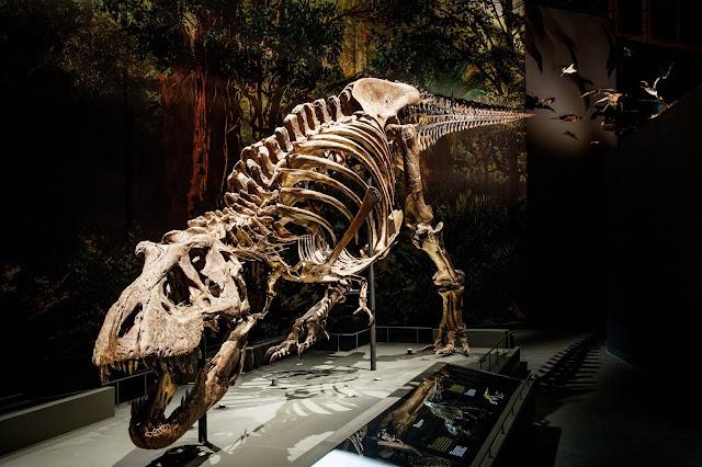 Walk the dinosaur! New biomechanical model shows Tyrannosaurus rex in a swinging gait