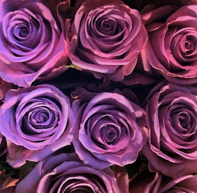 Lavender Roses - Stein Your Florist Co.