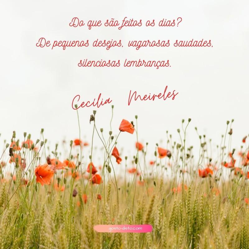 Pensamento de Cecília Meireles