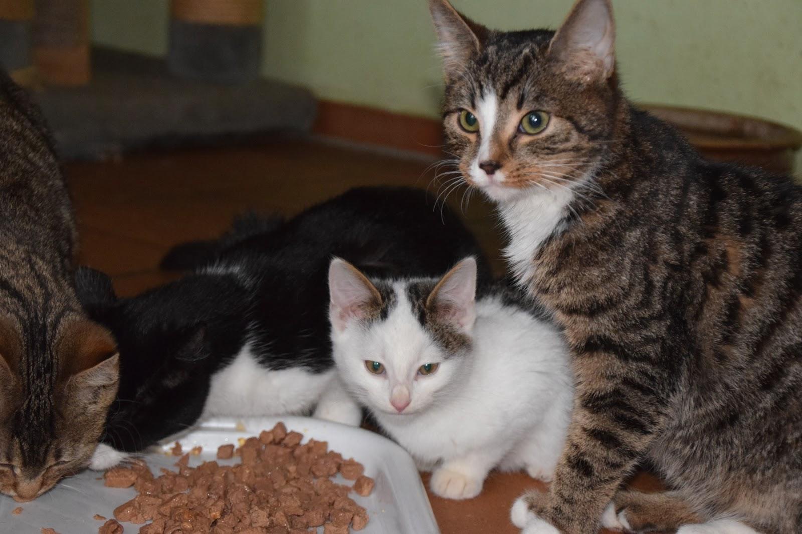 Katze Bekommt Junge