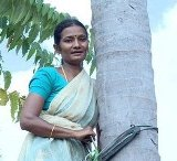 Indian female coconut picker
