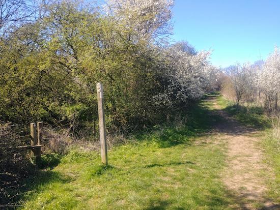 The point where you take Sandon footpath 10 and continue ESE (point 9)