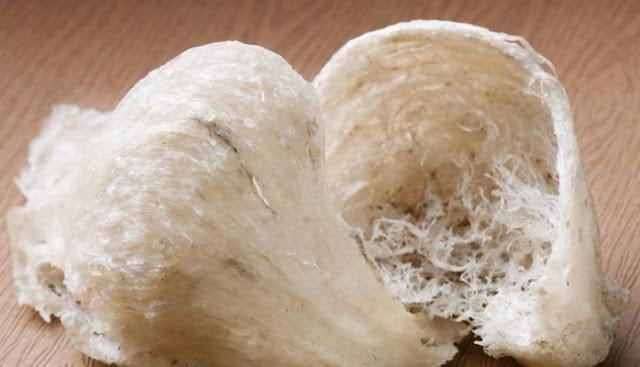 13 Manfaat Sarang Burung Walet Untuk Kesehatan
