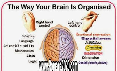 الدماغ البشري 5 خمس حقائق مذهلة لا تعرفها عن دماغ الإنسان