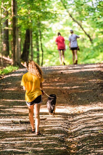 Girl Walking The Dog For Pocket Money