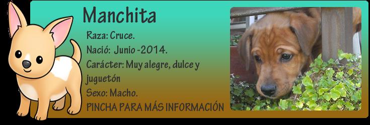 http://almaexoticos.blogspot.com.es/2014/08/manchita-abandonados-en-un-cubo-de.html