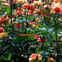 WowEscape Blossom Rose Garden Escape