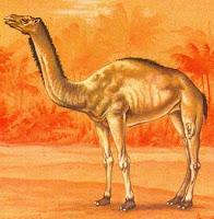 L'epicamelo, l'antenato del cammello. mammiferi preistorici