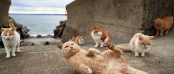 Pulau kucing Tashirojima Jepang