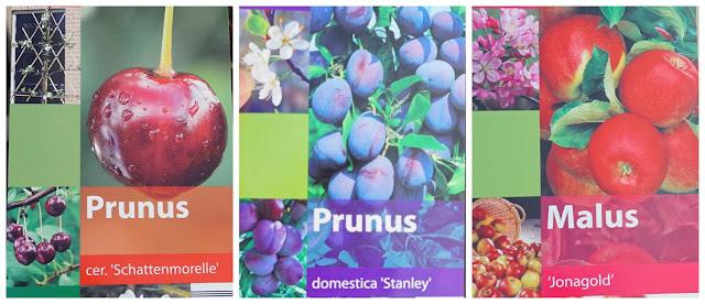 the 3 new fruit trees- a stubborn optimist blog - C Gault 2020