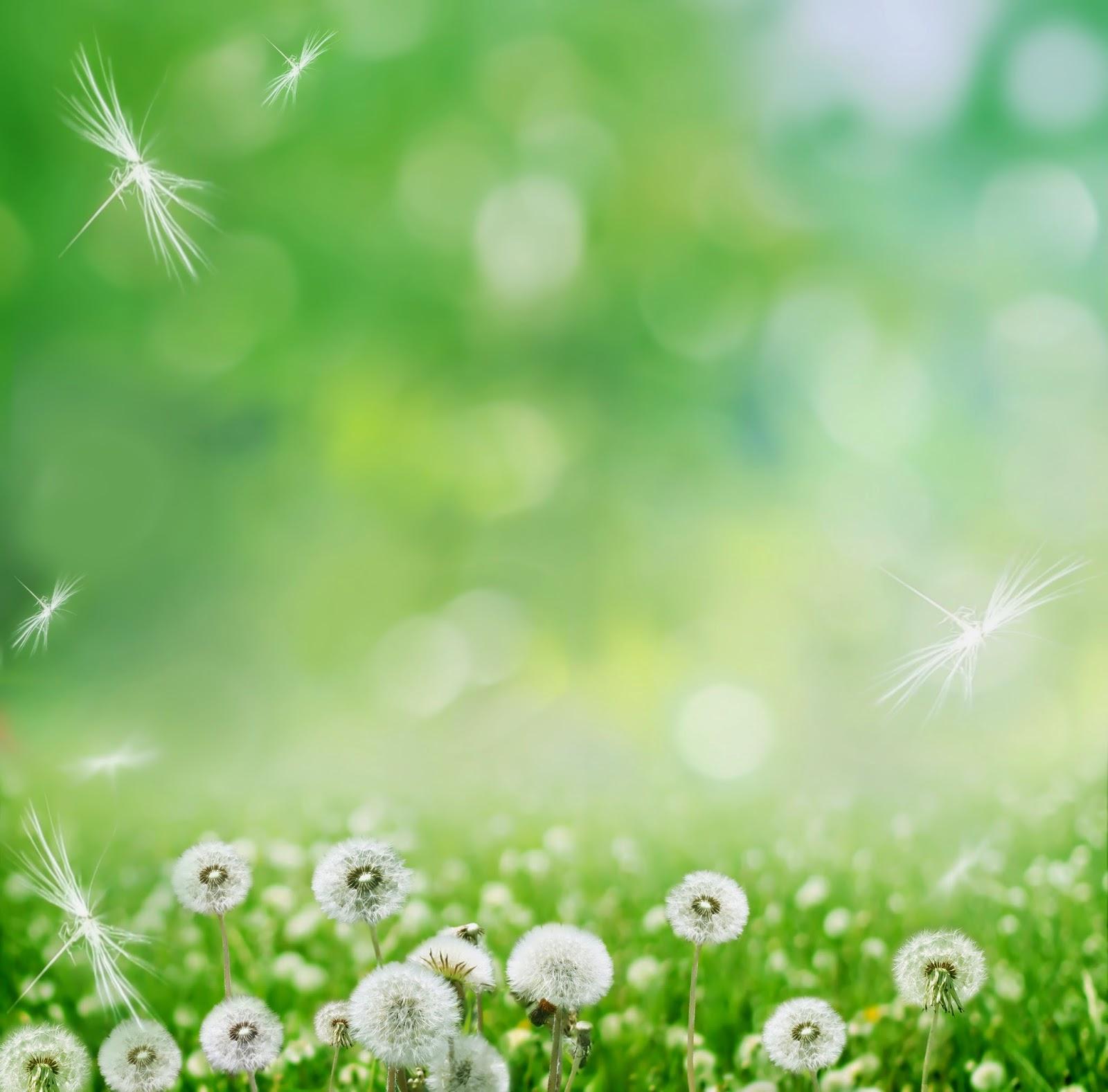 Fotos De Flores Hermosas Para Fondo De Pantalla