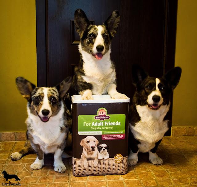 karma, karma dla psów, welsh corgi, welsh corgi cardigan, corgi, cardigan, jedzenie, jedzenie dla psów, for friends, biba, yuma, twiggy, cardimania