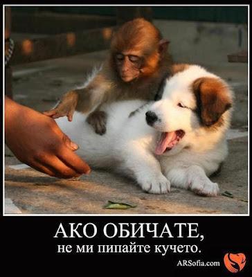 Ако обичате, не ми пипайте кучето!