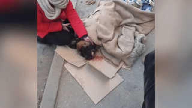 Житель Саратова выкинул собаку с четвёртого этажа. Свидетелями жуткой сцены стали дети