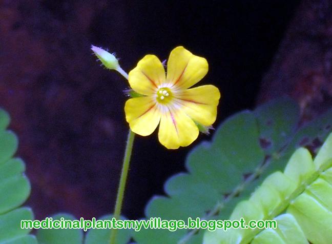 Medicinal Plants and Their MalayalamNames