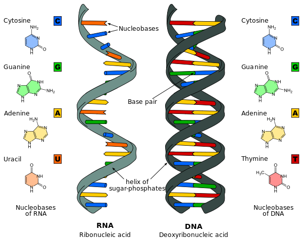 This Is What Makes DNA And RNA So Interesting