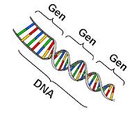 Pewarisan Sifat :Gen - DNA