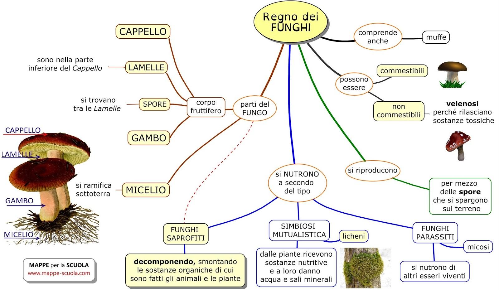 Conosciuto MAPPE per la SCUOLA: I FUNGHI EQ33