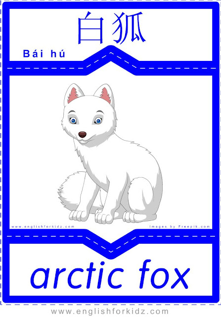 Arctic fox - English-Chinese flashcards for wild animals topic