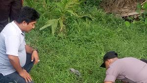 Warga Temukan Granat Nanas di Desa Lubuk Mandarsah
