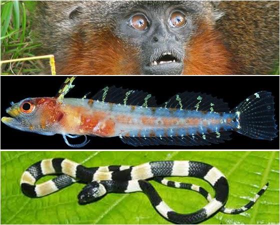 10 Espécies de Animais Descobertas Recentemente
