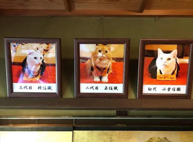 Koyuki không phải là trụ trì đầu tiên của Nyan Nyan Ji, trước đó đã có 2 mèo trụ trì khác nhưng đều đã qua đời.