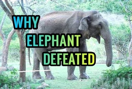 why-elephant-defeated-quick-short-story-in-english